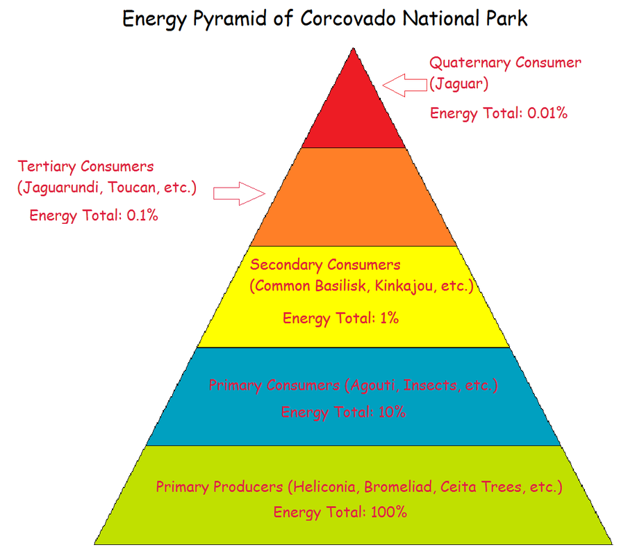 Ecological Energy Pyramid - Energy Etfs